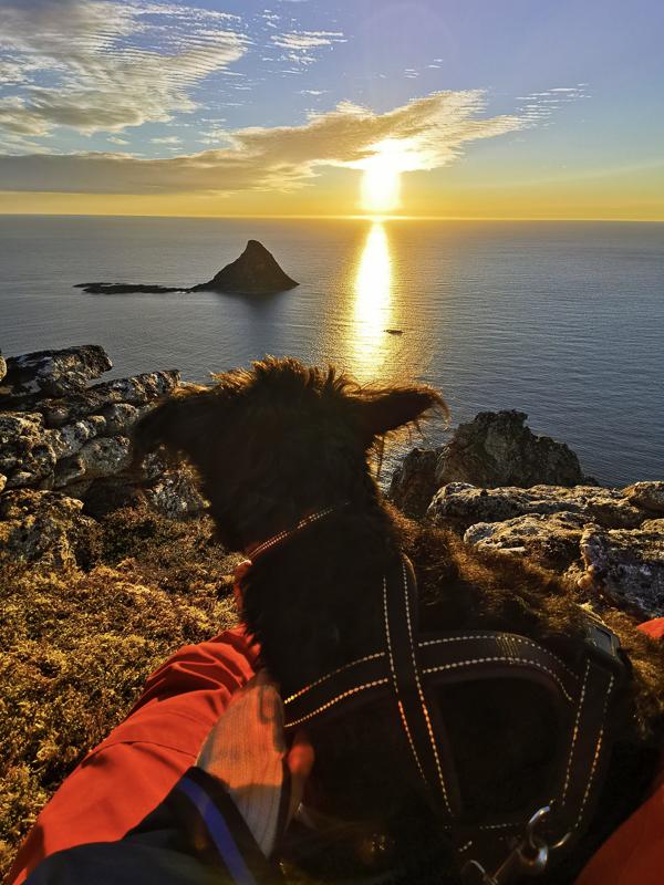Fra fjellet, ned mot Bleiksøya © Midnattsol Camping