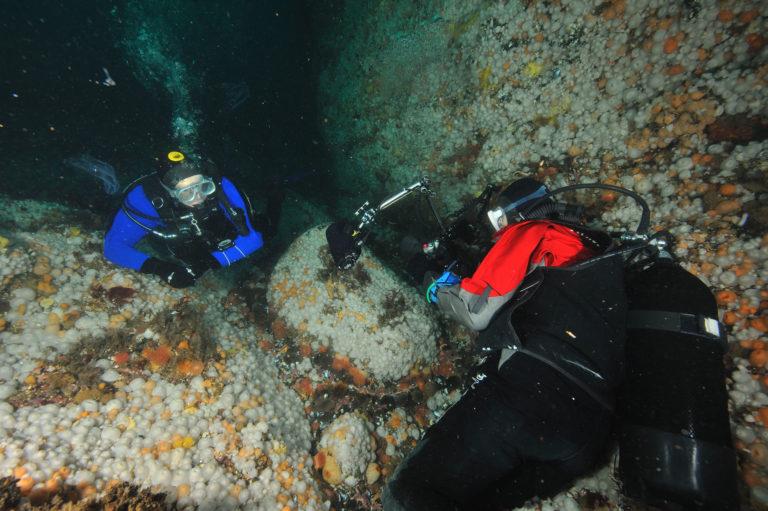 Diving into the current © Vebjørn Karlsen