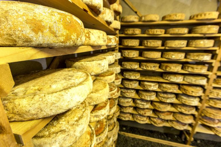 Cheese at the Kjerringø cheese factory © Rune Nilsen