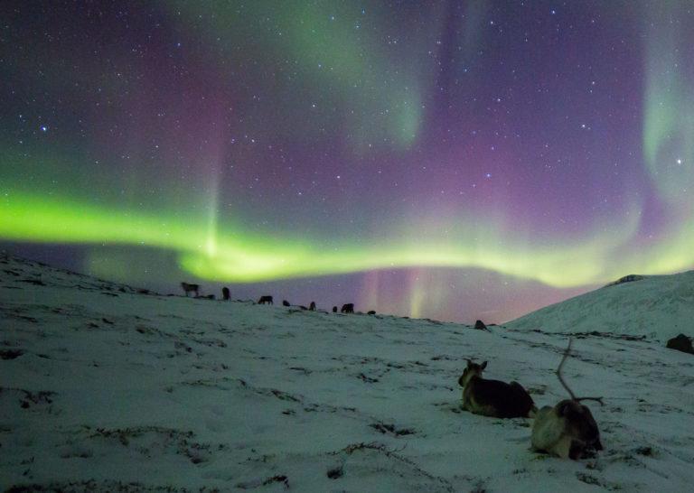 At the Rekvik mountain we met both Rudolph and Aurora © William Copeland