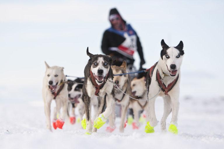 Running dogs © Kjell O Brun