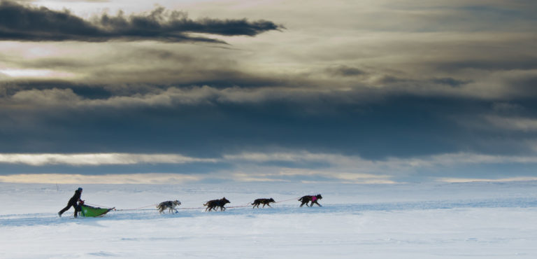 Who let the dogs out? © Geir Stian Larsen