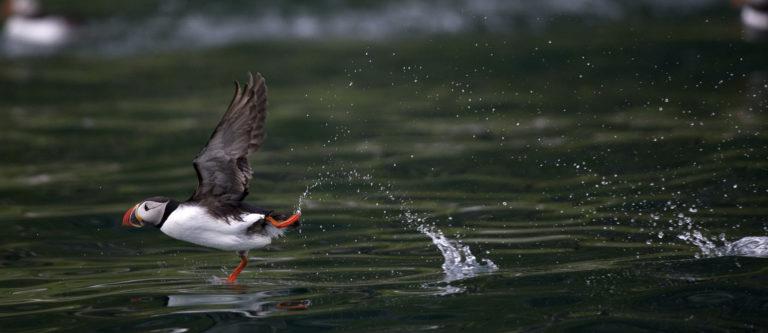 Taking off © Marten Bril