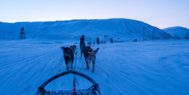 Ut på hundetur i blålys. Du lærer det på få minutter © Ann J Nordvålen