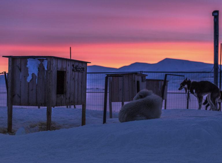 Hundene er alltid ute, og det er det de er skapt for © Terje Nergard Photography