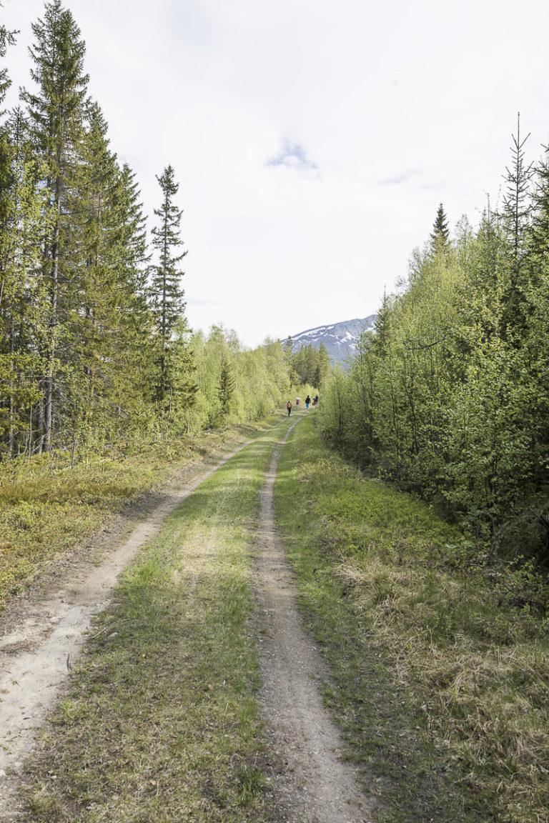 På vei gjennom skogen opp mot fjellet © Kathrine Sørgård