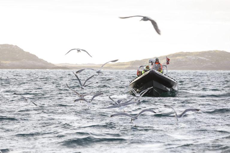 Sei? Fisk i havet © Kathrine Sørgård