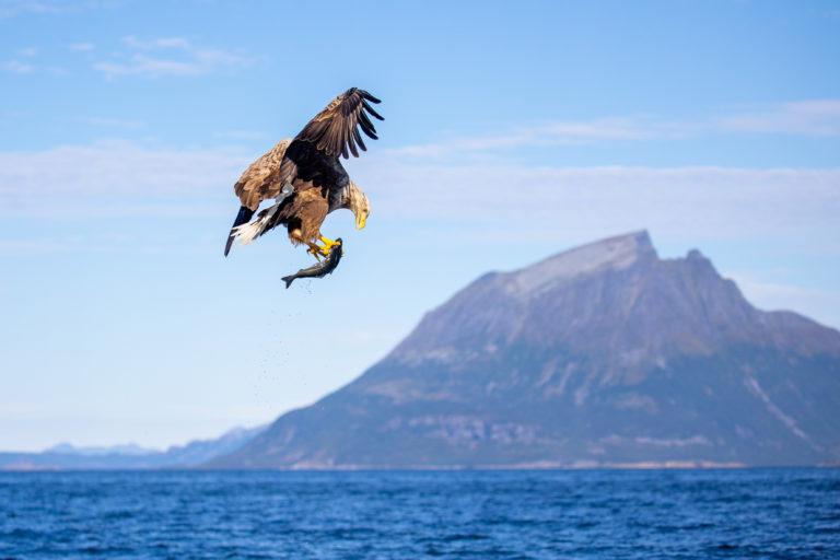 Eagle safari © Hans-Petter Sørensen/Visit Nesna