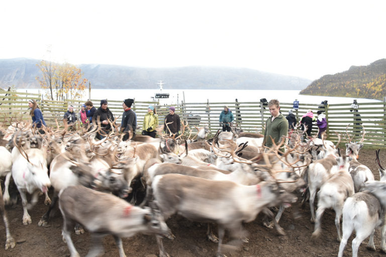 The whole family is on their feet during the spring migration. In the background the navy landgang vessel used to transport the reindeer back to the mainland © Marit Helene Eira