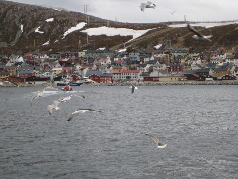 Bebyggelsen i Kjøllefjord reiser seg fra kaiområdene fiskebruk oppover i skråningen. Da har alle utsikt, og ingen går glipp av det når Hurtigruta legger til. De ganske firkantede husene er bygget på femtitallet, mens de mer langstrakte ble bygget etter gjenreisningsperioden © Nina Smedseng
