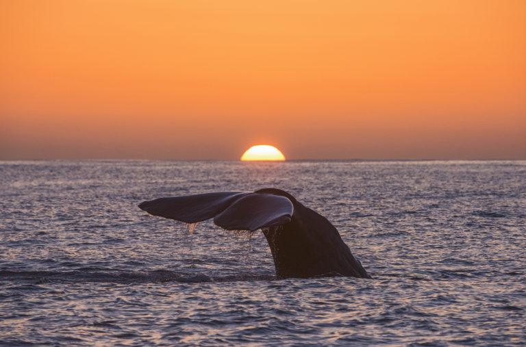 Hval i solnedgang. Foto: Marten Bril
