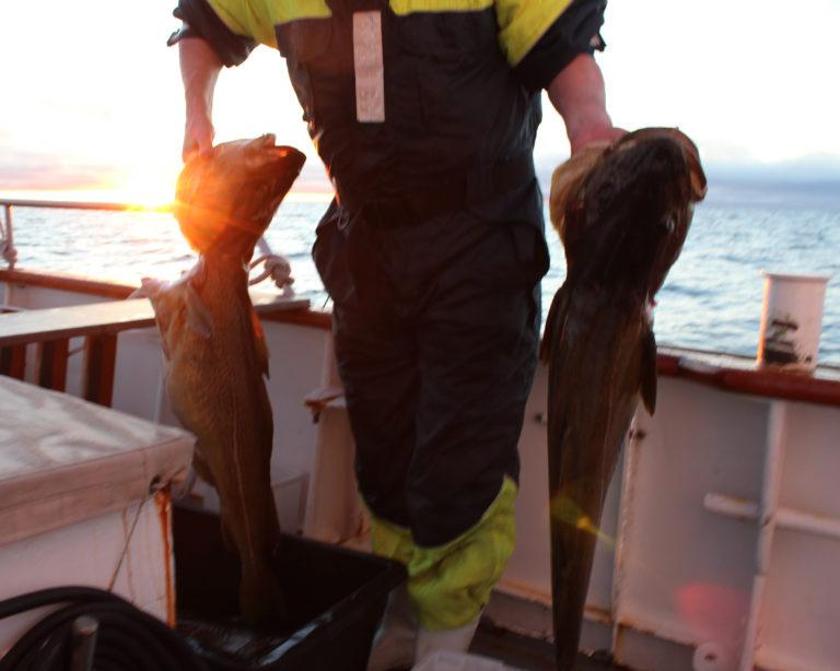 Foto: World Sea Explorer
