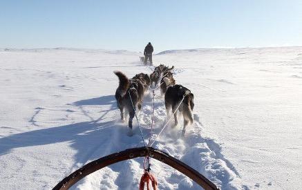 Hundekjøring. Foto: PNH Norway