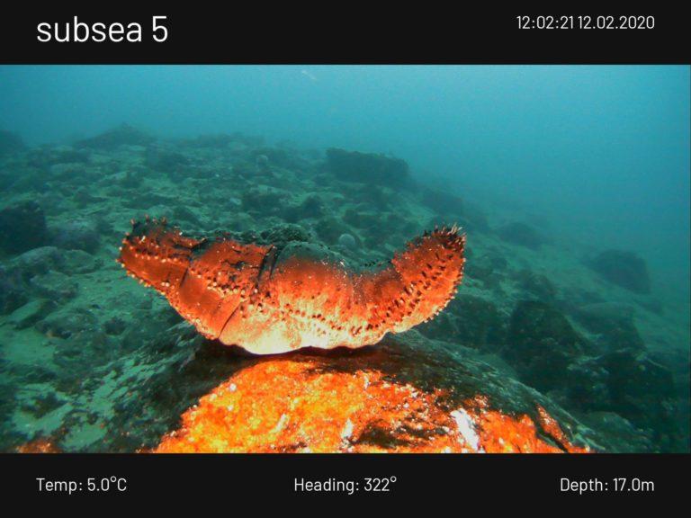Hvis forholdene legger til rette for det sjøsetter vi vår blueeye undervannsdrone for å ta en nærmere kikk på livet under overflaten. Foto: brimexplorer.com