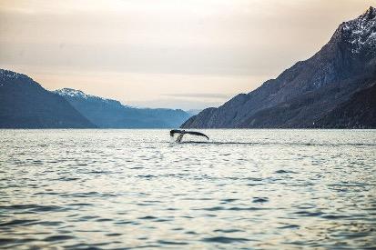 Hvalsafari. Foto: PNH Norway