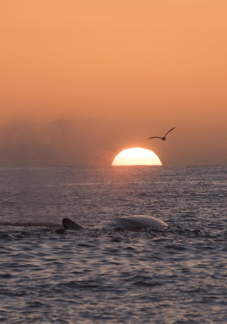 A summer's night © Vesterålen / Whale2sea