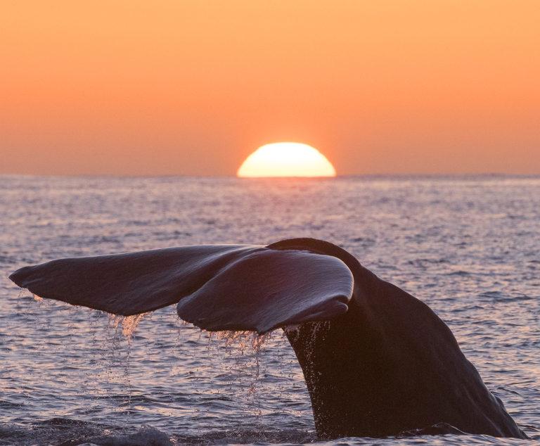 Whale into the horizon © Vesterålen / Whale2sea