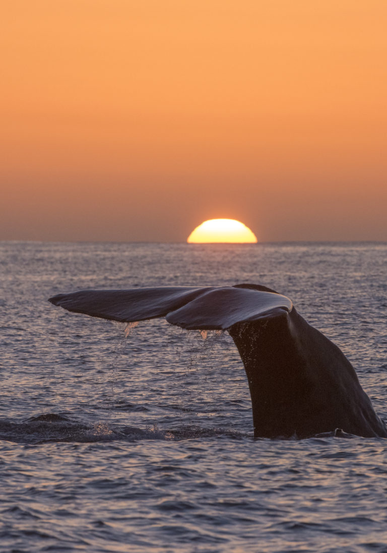 Both the sun and the whale are going down © Vesterålen / Whale2sea