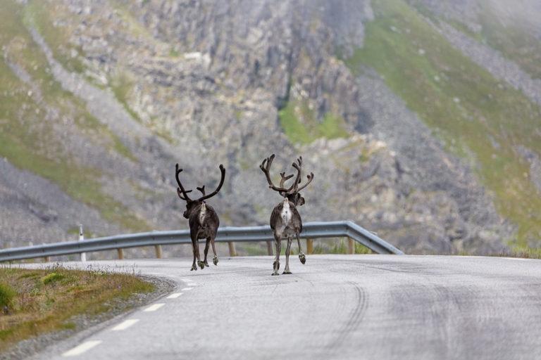 Heading to Berlevåg along the Arctic Sea Road © Fotoknoff / www.visitvaranger.no