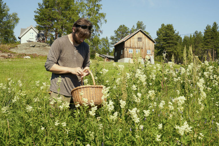 Meadowsweet is a traditional herb in the Pasvikdalen Valley © Emile Holba / www.visitvaranger.no