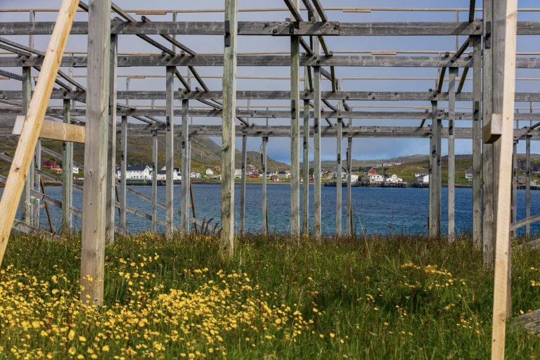 Early summer in Kongsfjord © Fotoknoff / www.visitvaranger.no