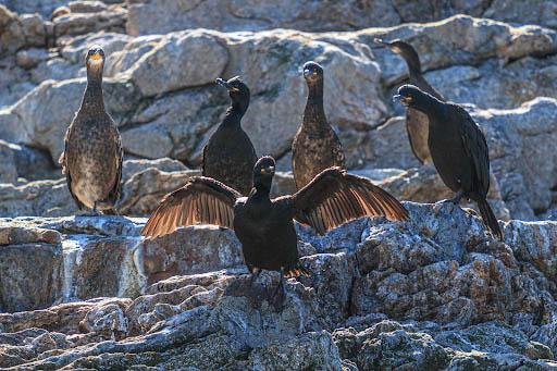 Fuglesafari. Foto: Visit Nordkapp