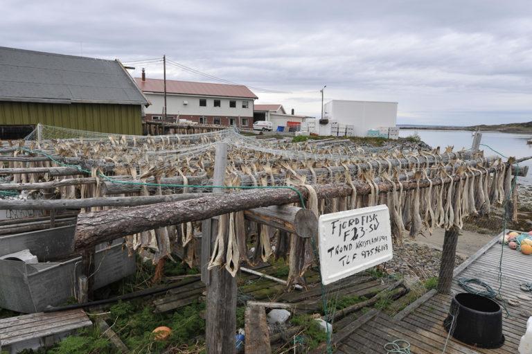 Fisk til tørk i tradisjonsrike Bugøynes © Bernt Nilsen, Kirkenes
